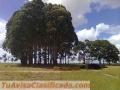 Fazenda com 720 alqueires ou 3.500 hectares tendo 1100 metros de altitude no Brasil
